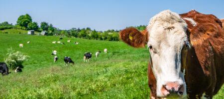 ativo-biologico-vaca